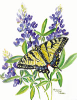 African Swallowtail butterfly on purple flowers