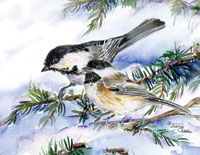 Pair of chickadees on pine branch