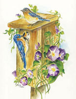 Bluebirds in a birdhouse