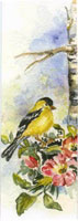 Goldfinch on a birch branch; matching card BC0139